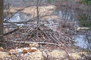 Beaver Lodge. Photo by Bet Zimmerman