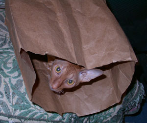 Cat in a bag. Photo by Bet Zimmerman